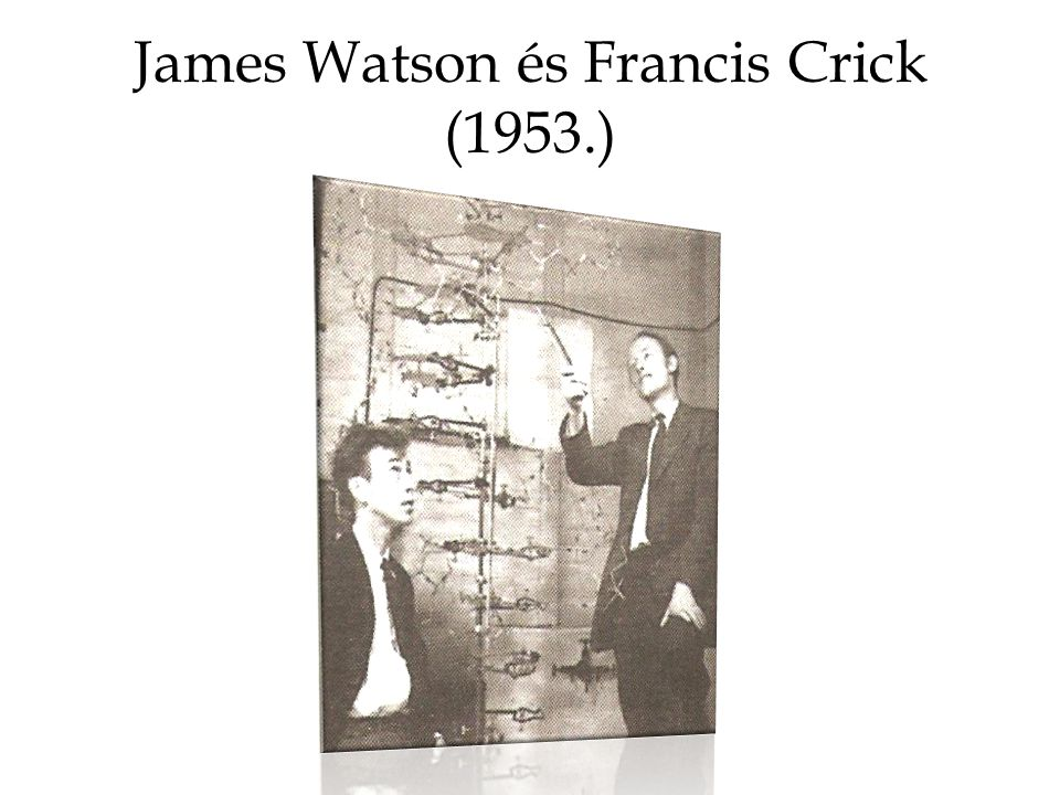 James Watson és Francis Crick (1953.)