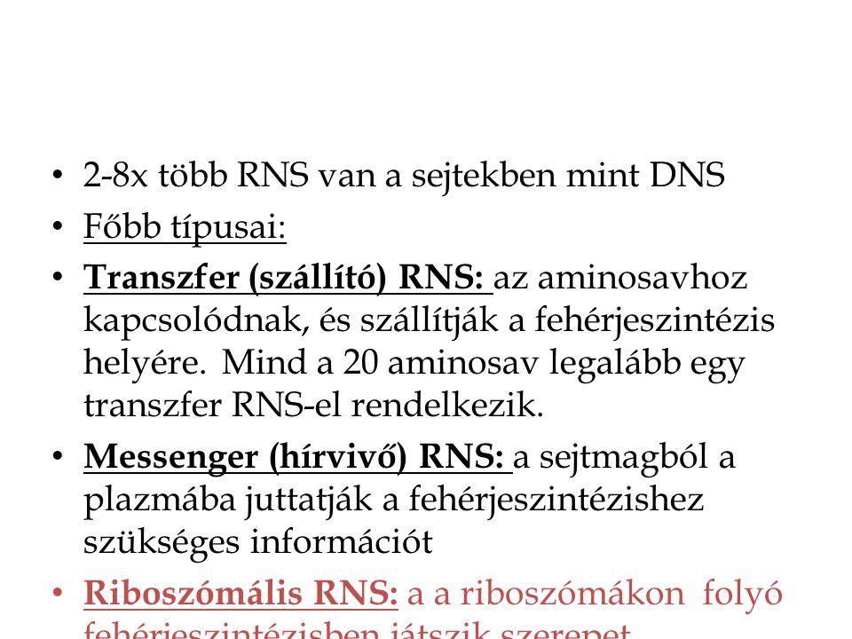 2-8x több RNS van a sejtekben mint DNS