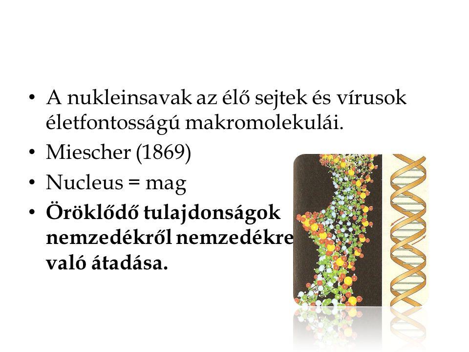 A nukleinsavak az élő sejtek és vírusok életfontosságú makromolekulái.