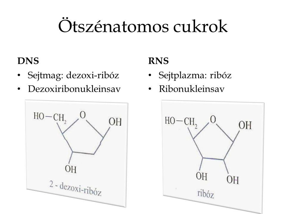 Ötszénatomos cukrok DNS RNS Sejtmag: dezoxi-ribóz Dezoxiribonukleinsav