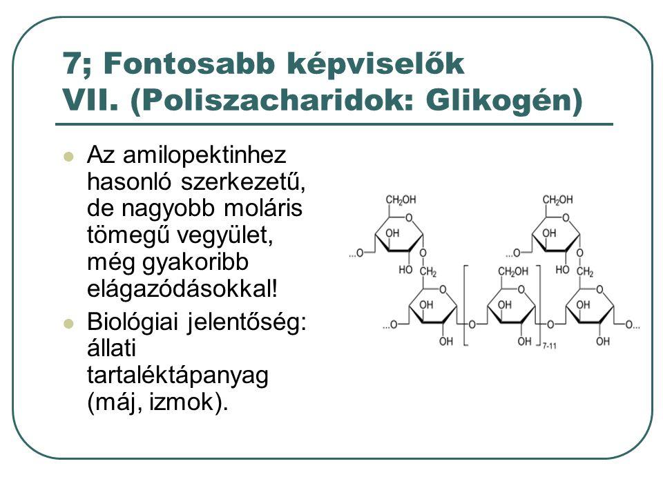 7; Fontosabb képviselők VII. (Poliszacharidok: Glikogén)