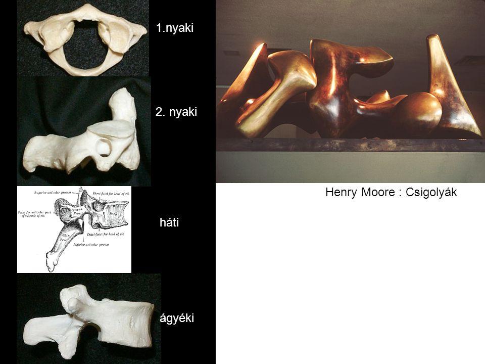 1.nyaki 2. nyaki Henry Moore : Csigolyák háti ágyéki