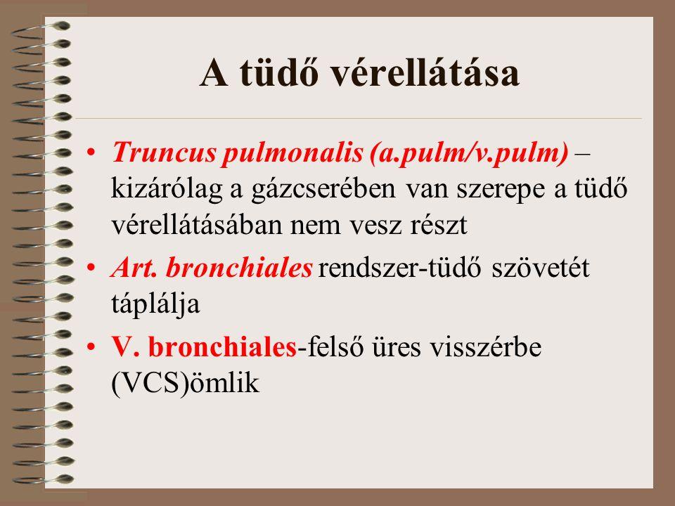 A tüdő vérellátása Truncus pulmonalis (a.pulm/v.pulm) –kizárólag a gázcserében van szerepe a tüdő vérellátásában nem vesz részt.
