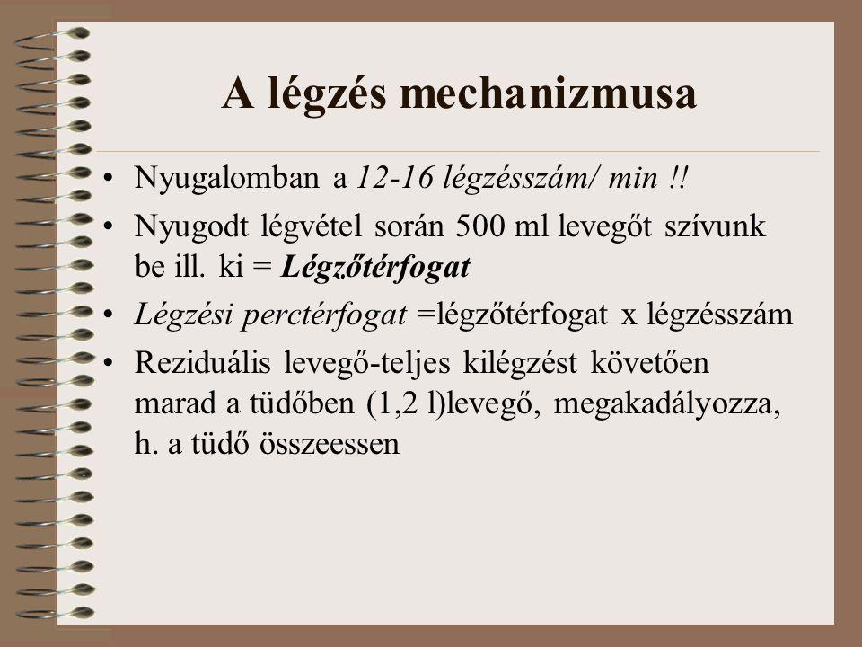 A légzés mechanizmusa Nyugalomban a 12-16 légzésszám/ min !!