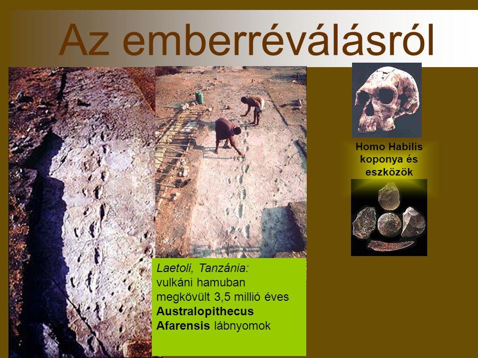 Homo Habilis koponya és eszközök