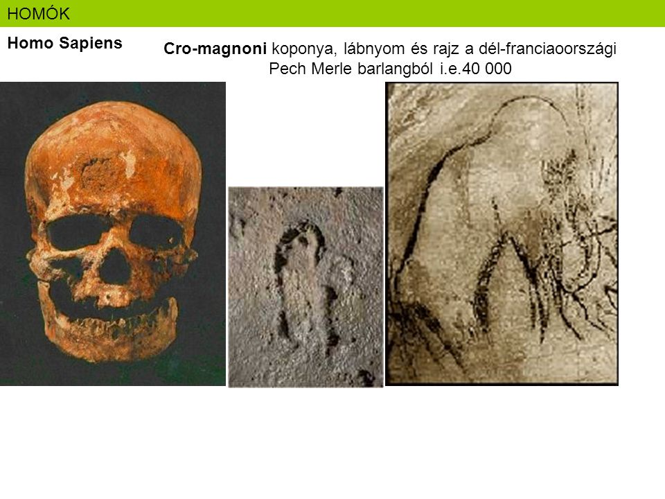 HOMÓK Homo Sapiens.
