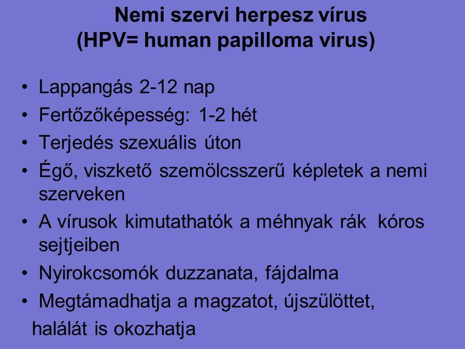 Nemi szervi herpesz vírus (HPV= human papilloma virus)