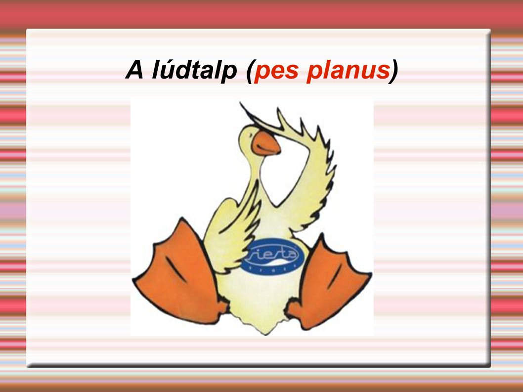 A lúdtalp (pes planus)