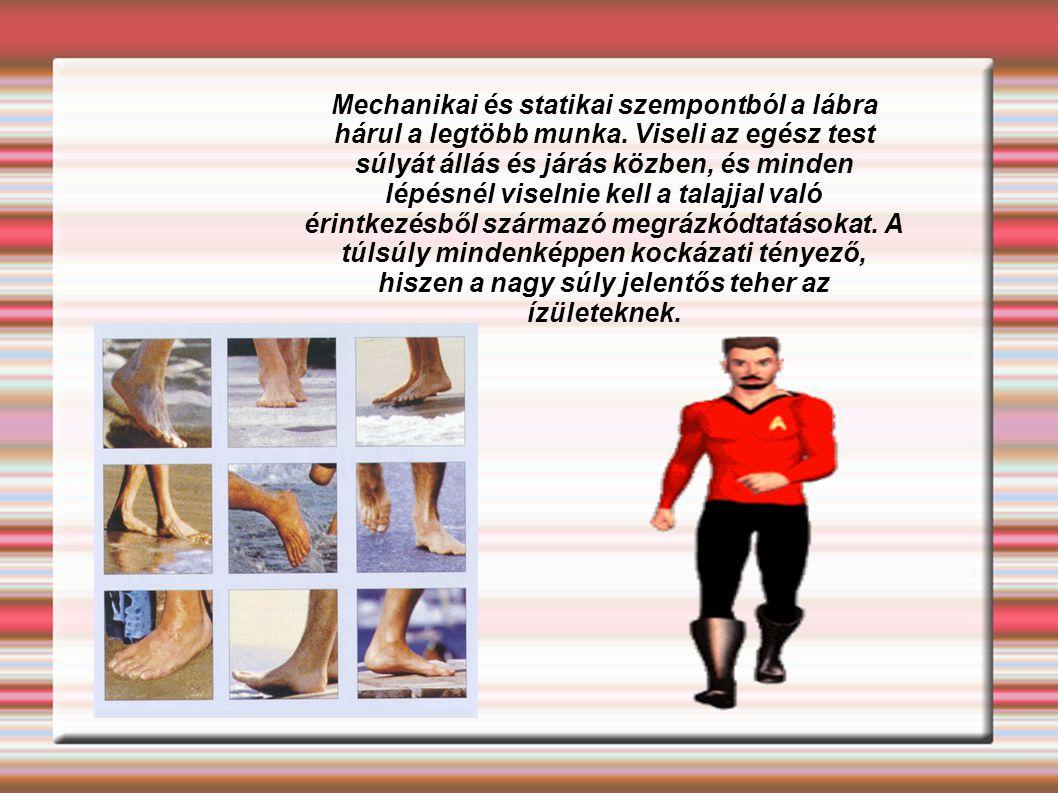 Mechanikai és statikai szempontból a lábra hárul a legtöbb munka