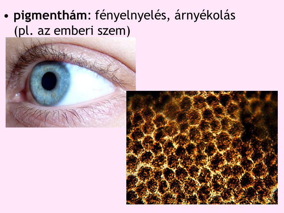 pigmenthám: fényelnyelés, árnyékolás (pl. az emberi szem)