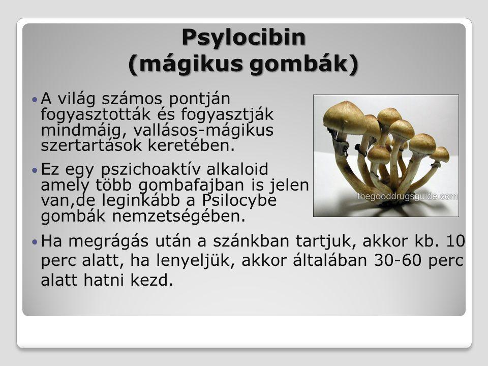 Psylocibin (mágikus gombák)