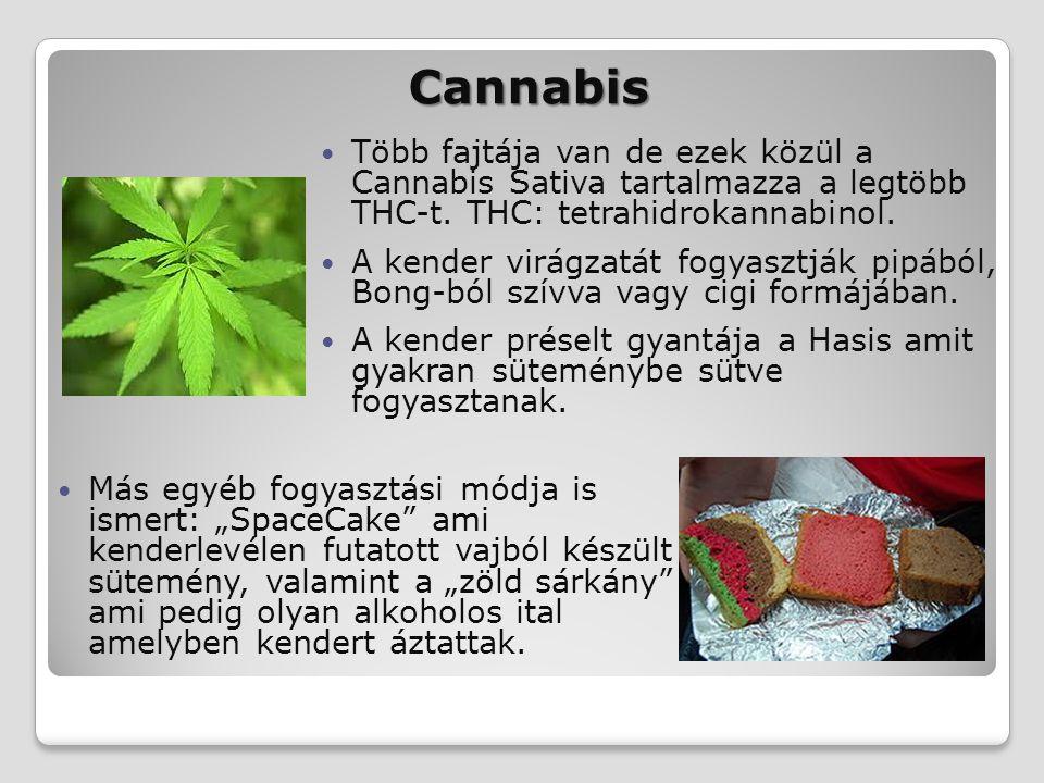 Cannabis Több fajtája van de ezek közül a Cannabis Sativa tartalmazza a legtöbb THC-t. THC: tetrahidrokannabinol.