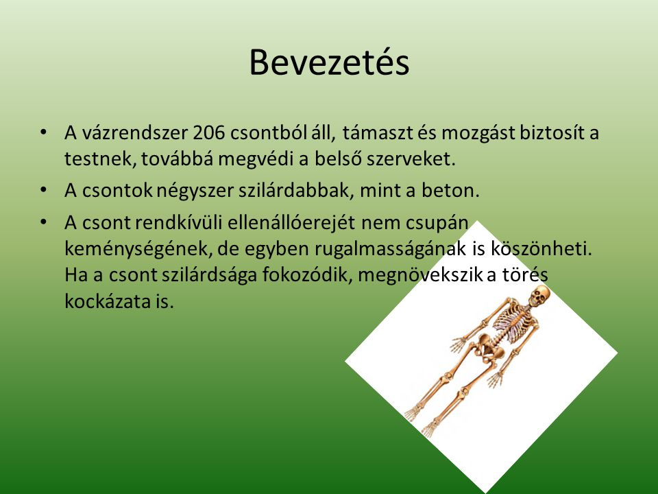 Bevezetés A vázrendszer 206 csontból áll, támaszt és mozgást biztosít a testnek, továbbá megvédi a belső szerveket.