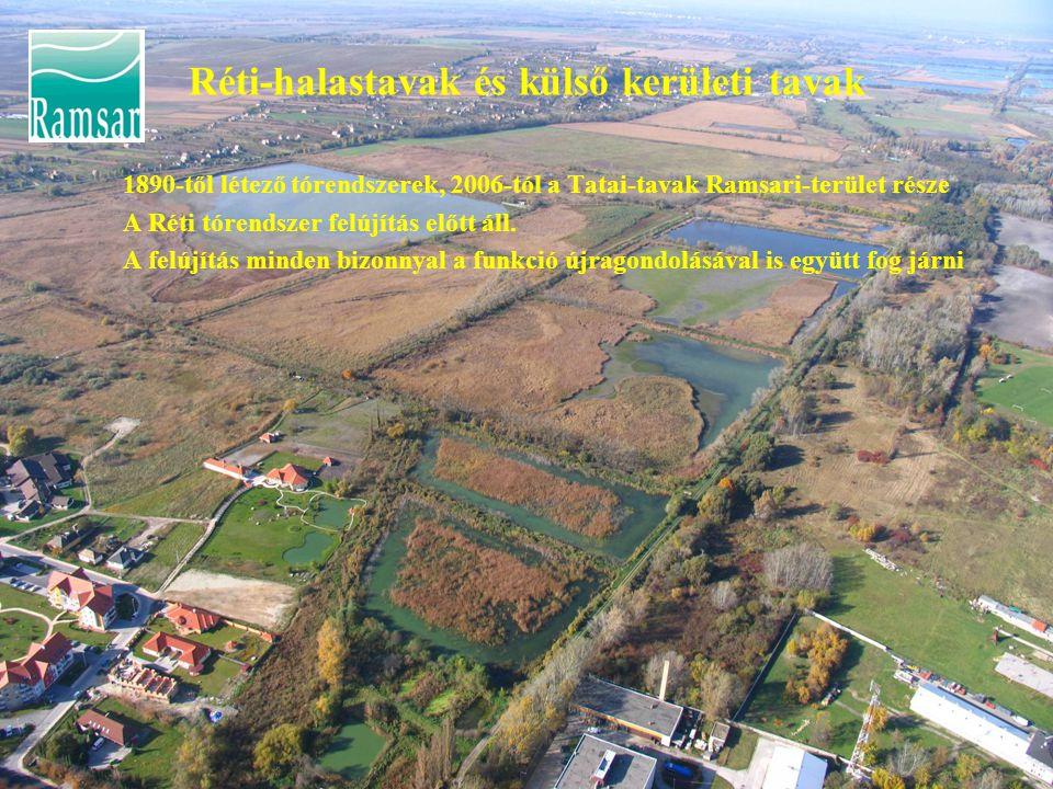 Réti-halastavak és külső kerületi tavak