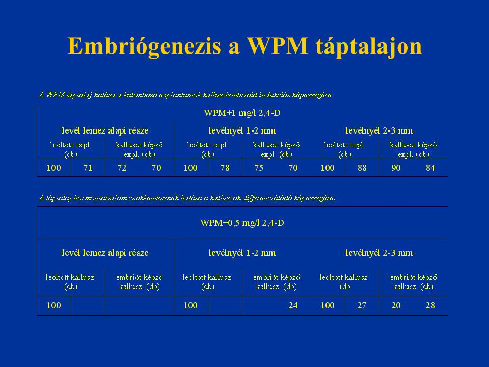 Embriógenezis a WPM táptalajon