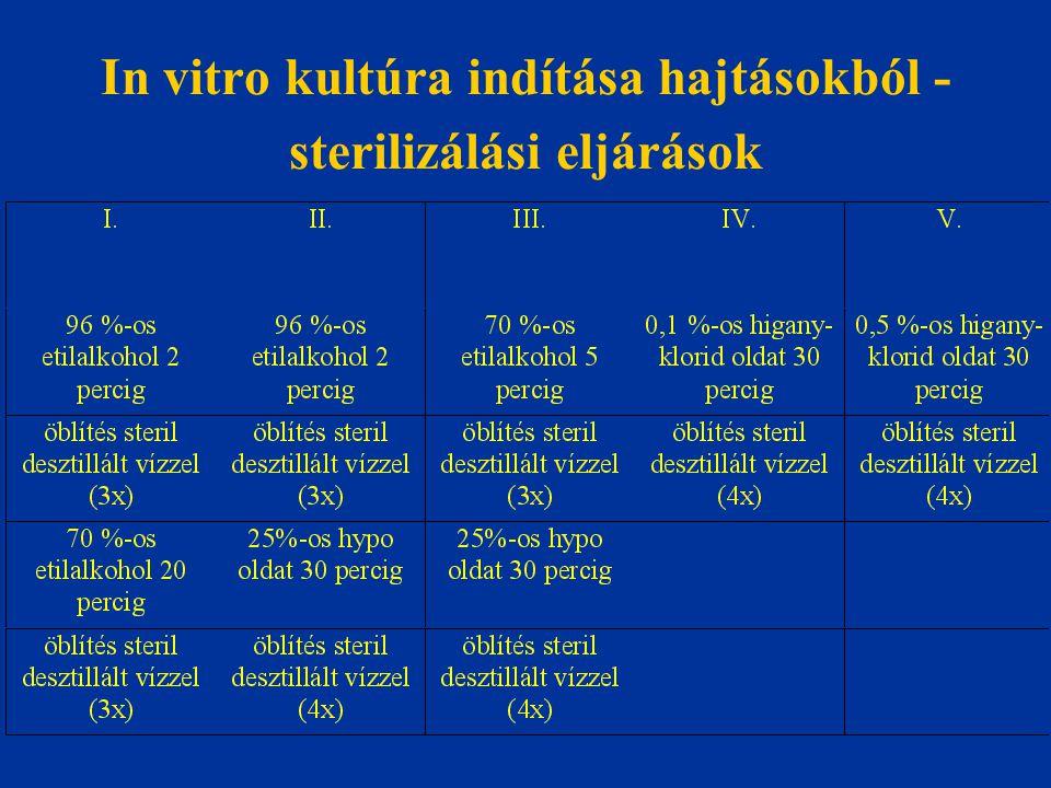 In vitro kultúra indítása hajtásokból - sterilizálási eljárások