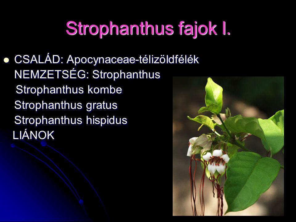 Strophanthus fajok I. CSALÁD: Apocynaceae-télizöldfélék