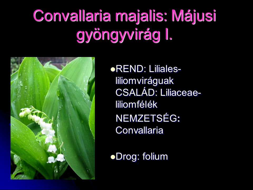 Convallaria majalis: Májusi gyöngyvirág I.