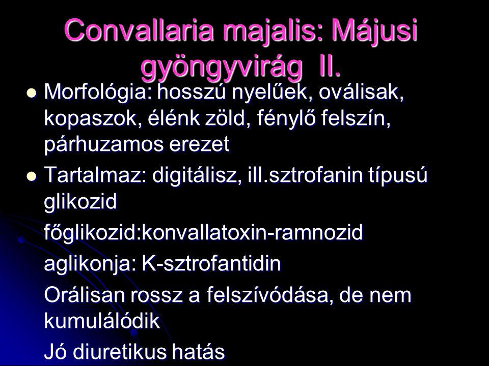 Convallaria majalis: Májusi gyöngyvirág II.