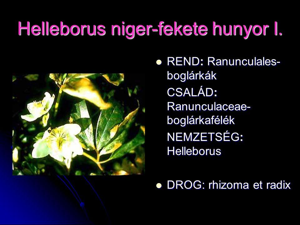 Helleborus niger-fekete hunyor I.