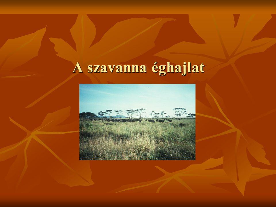 A szavanna éghajlat