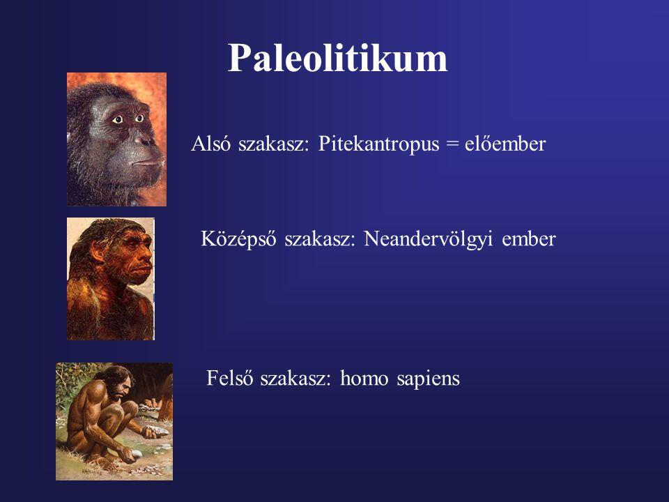 Paleolitikum Alsó szakasz: Pitekantropus = előember