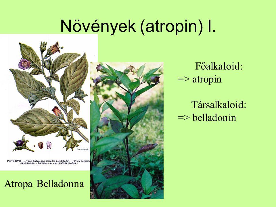 Növények (atropin) I. Főalkaloid: => atropin Társalkaloid: