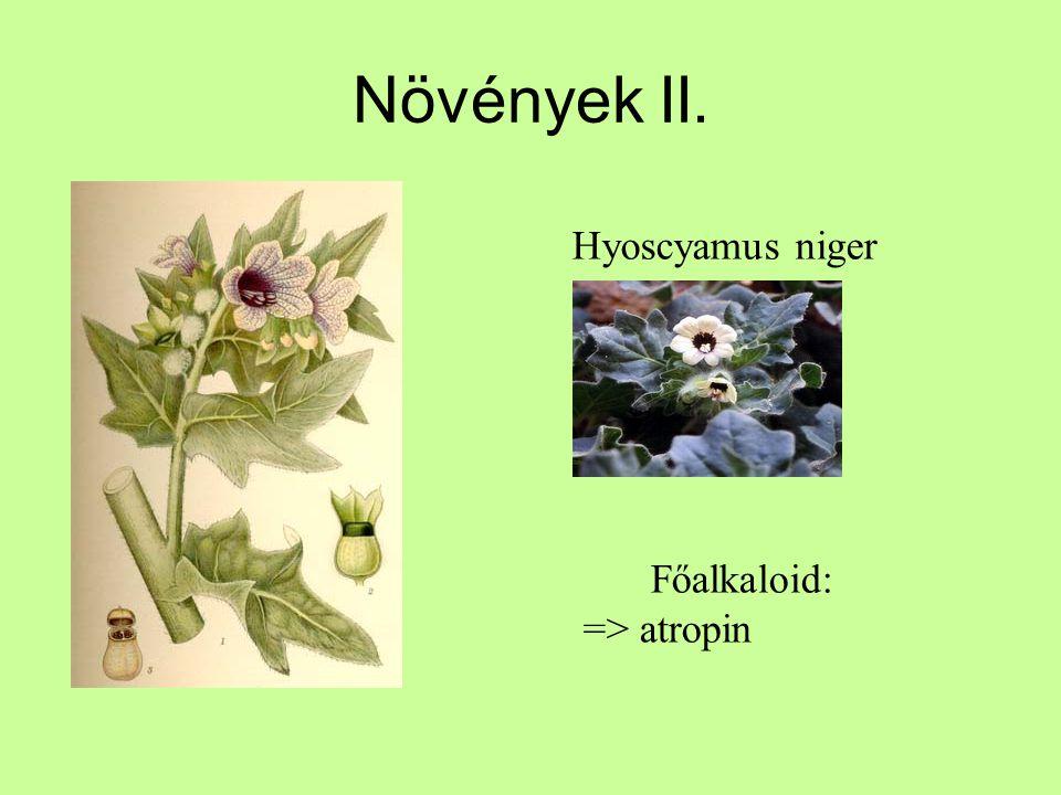 Növények II. Hyoscyamus niger Főalkaloid: => atropin