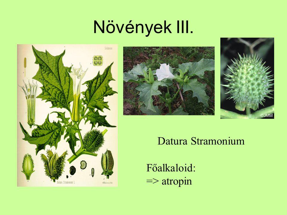Növények III. Datura Stramonium Főalkaloid: => atropin