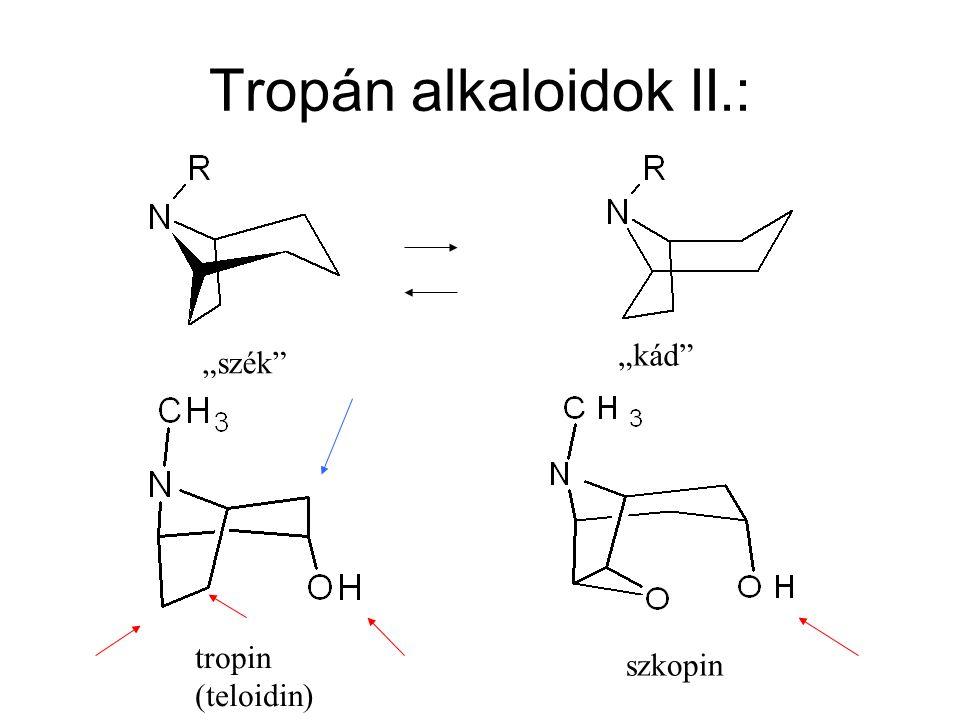 """Tropán alkaloidok II.: """"kád """"szék tropin (teloidin) szkopin"""