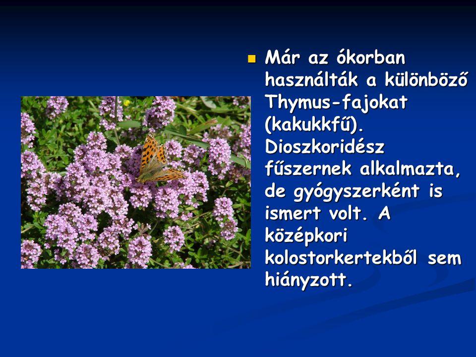 Már az ókorban használták a különböző Thymus-fajokat (kakukkfű)