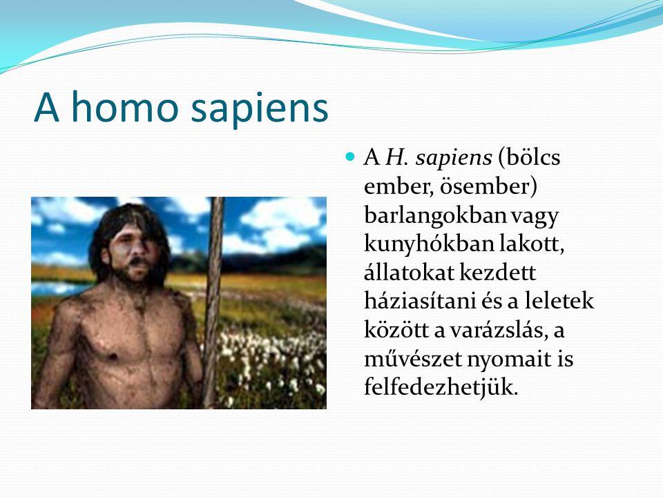 A homo sapiens