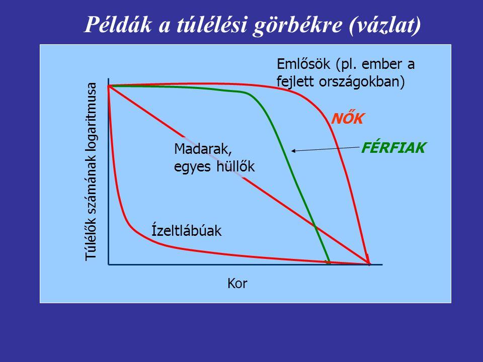 Példák a túlélési görbékre (vázlat)