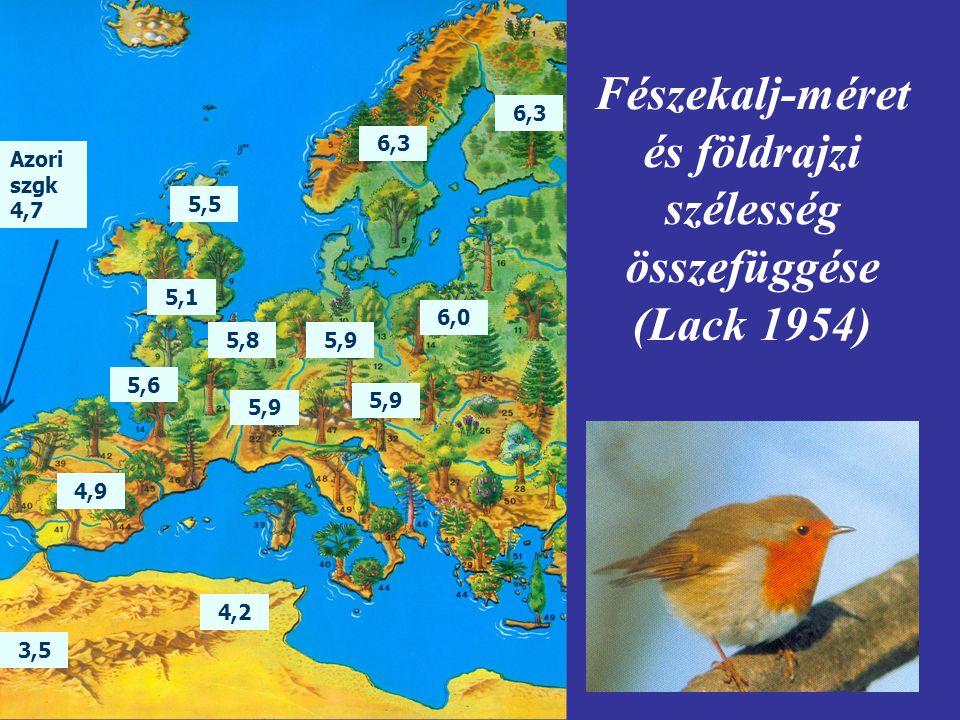Fészekalj-méret és földrajzi szélesség összefüggése (Lack 1954)