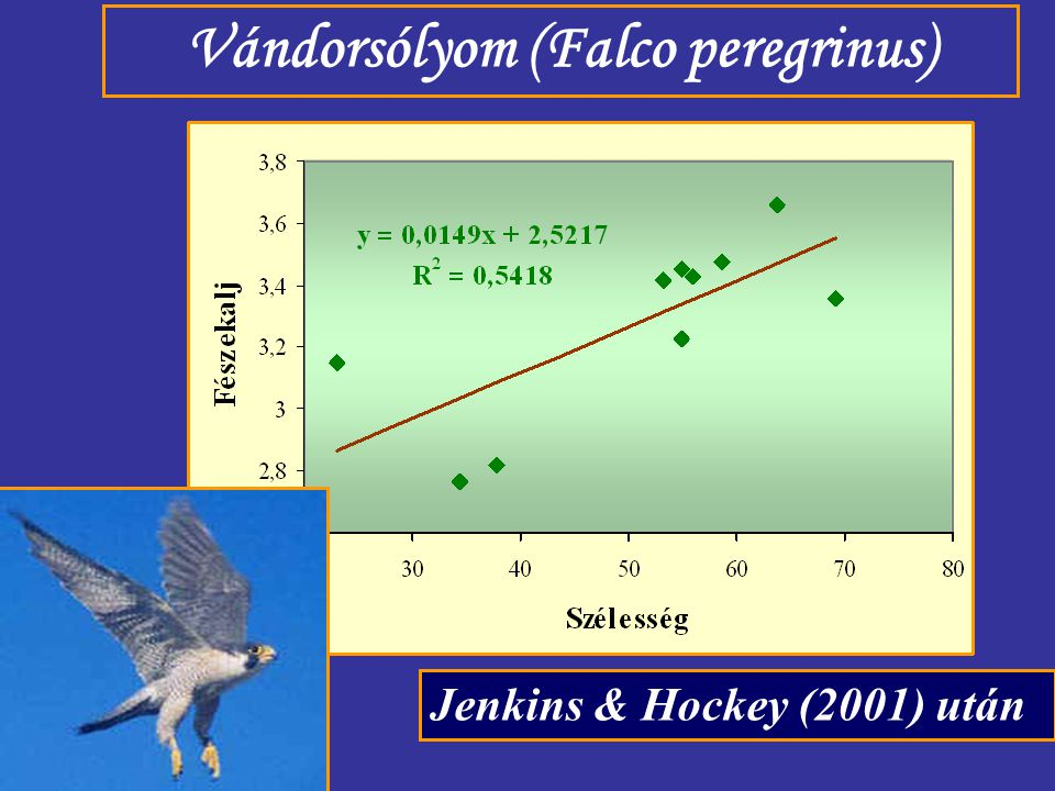 Vándorsólyom (Falco peregrinus)