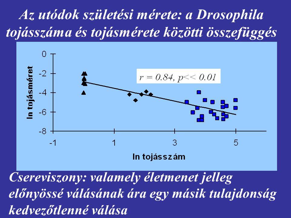 Az utódok születési mérete: a Drosophila tojásszáma és tojásmérete közötti összefüggés