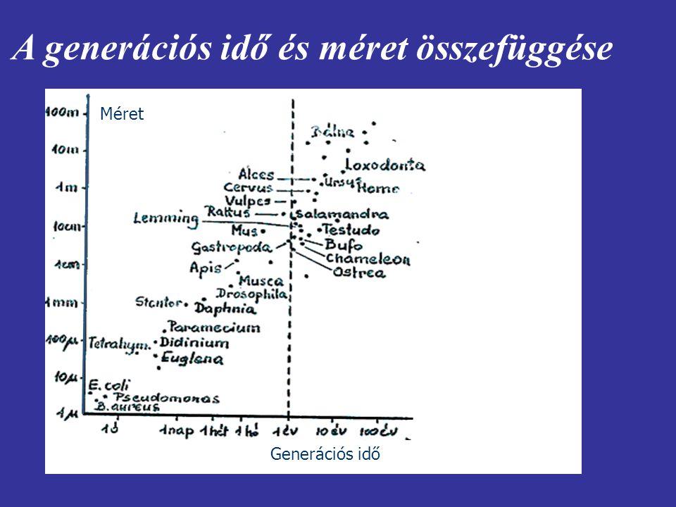 A generációs idő és méret összefüggése