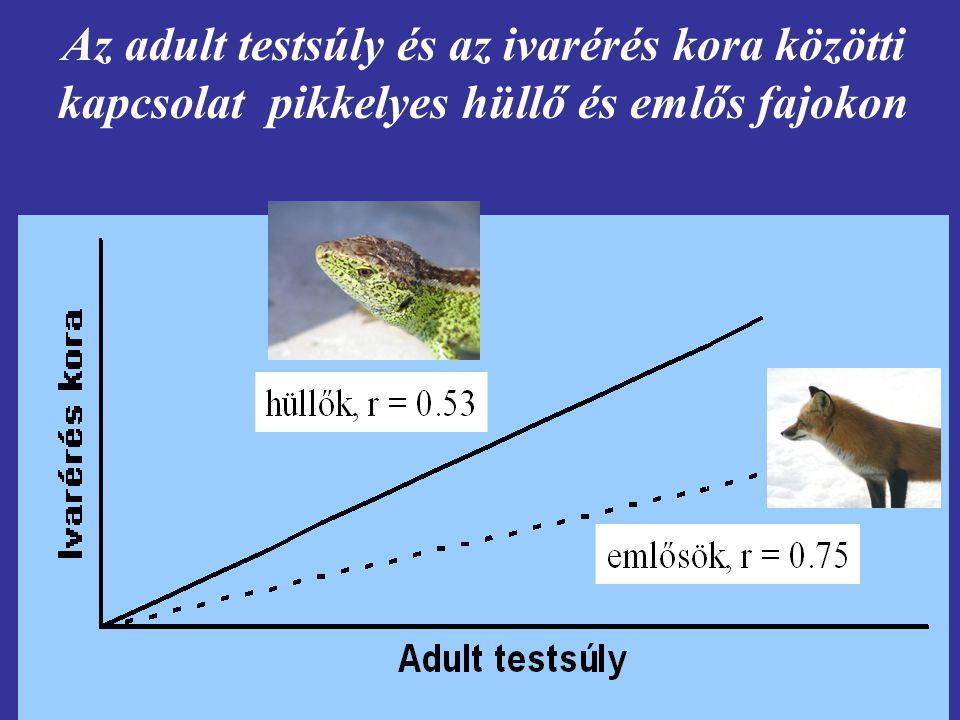 Az adult testsúly és az ivarérés kora közötti kapcsolat pikkelyes hüllő és emlős fajokon