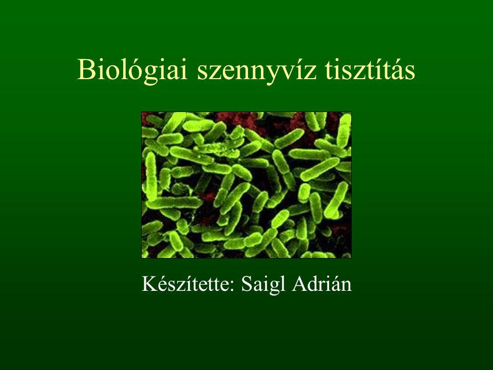 Biológiai szennyvíz tisztítás