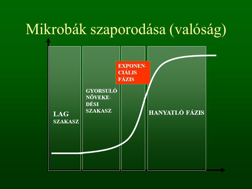 Mikrobák szaporodása (valóság)