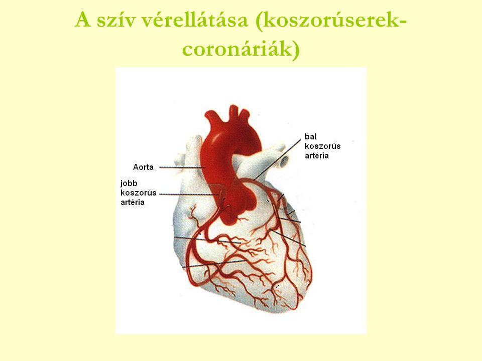 A szív vérellátása (koszorúserek-coronáriák)