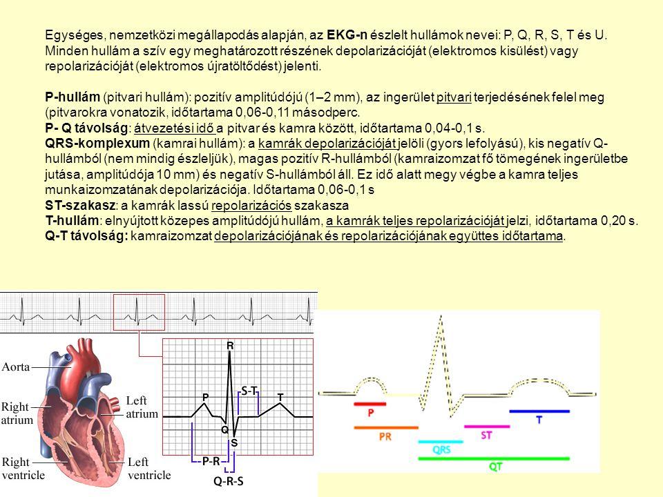 Egységes, nemzetközi megállapodás alapján, az EKG-n észlelt hullámok nevei: P, Q, R, S, T és U.