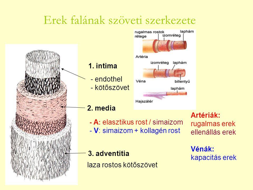 Erek falának szöveti szerkezete