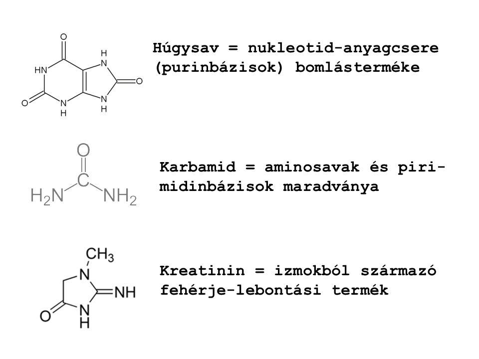 Húgysav = nukleotid-anyagcsere (purinbázisok) bomlásterméke