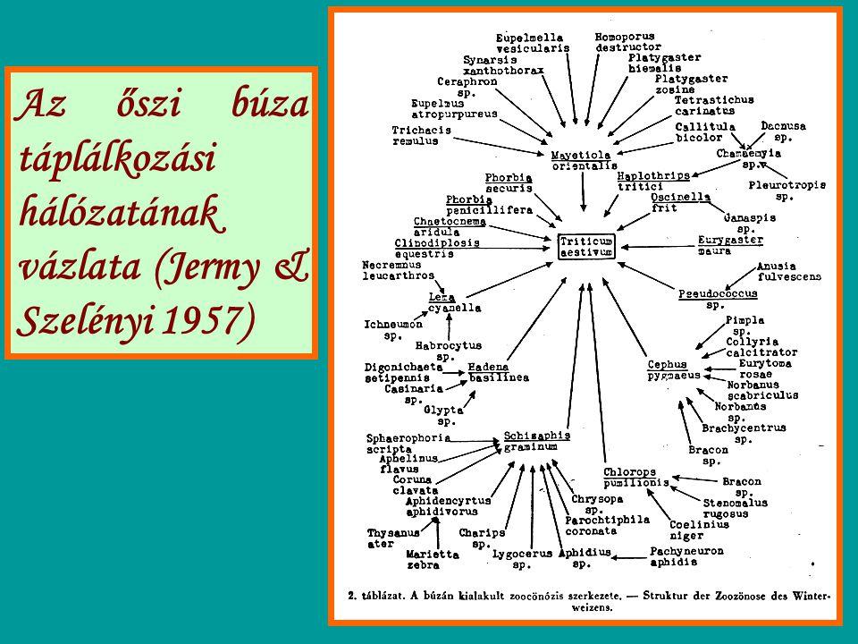 Az őszi búza táplálkozási hálózatának vázlata (Jermy & Szelényi 1957)