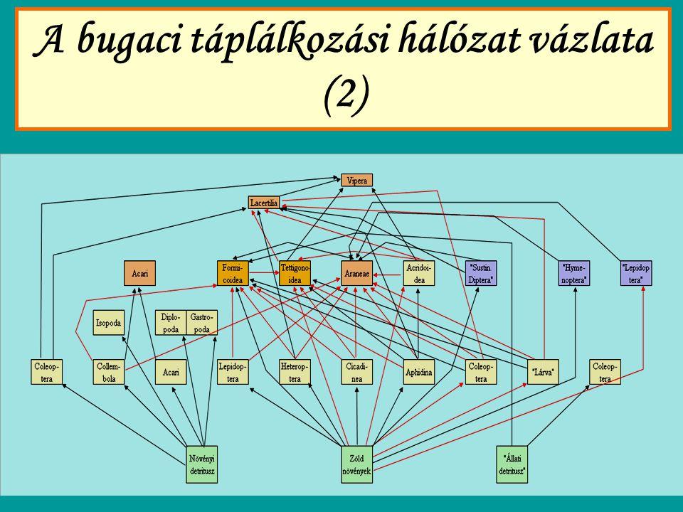 A bugaci táplálkozási hálózat vázlata (2)
