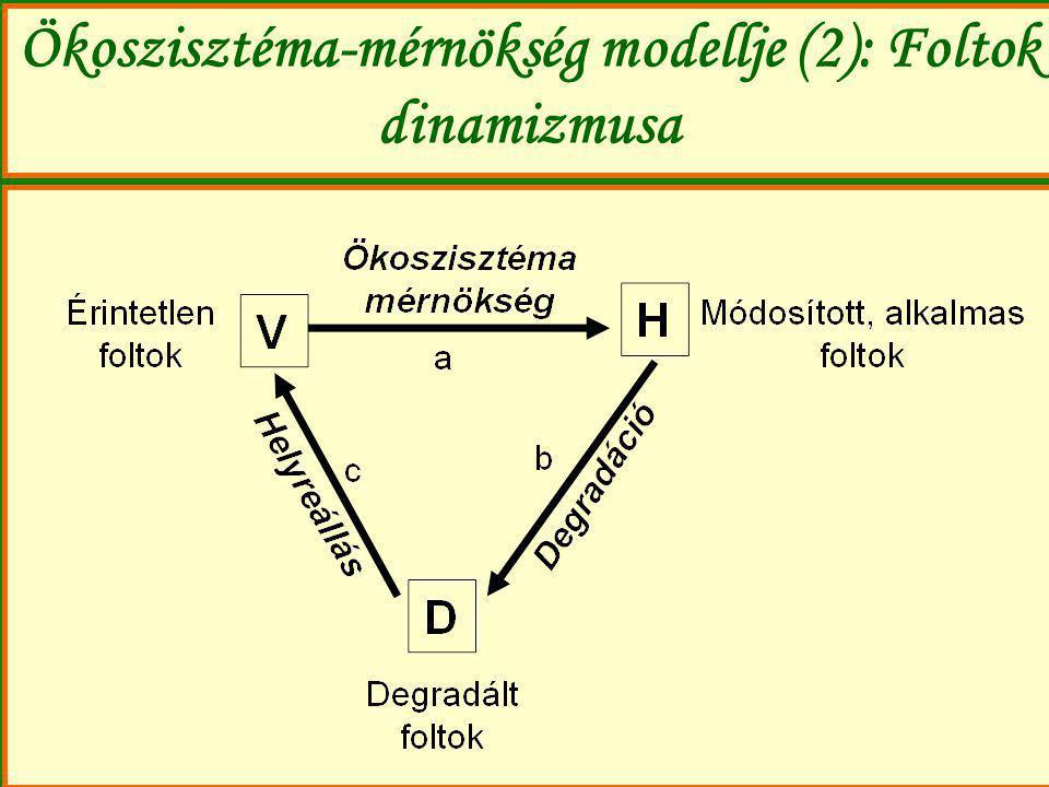 Ökoszisztéma-mérnökség modellje (2): Foltok dinamizmusa