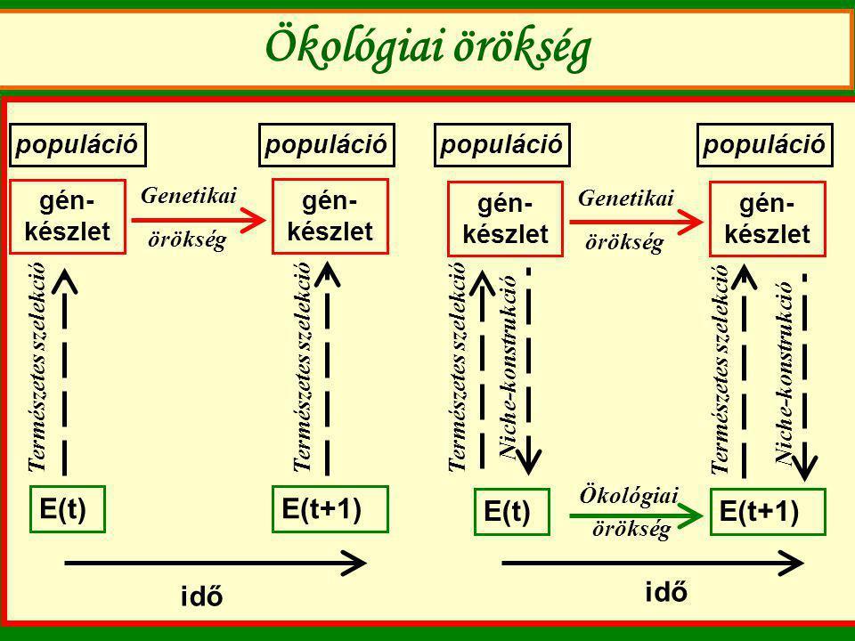 Ökológiai örökség E(t) E(t+1) E(t) E(t+1) idő idő populáció populáció