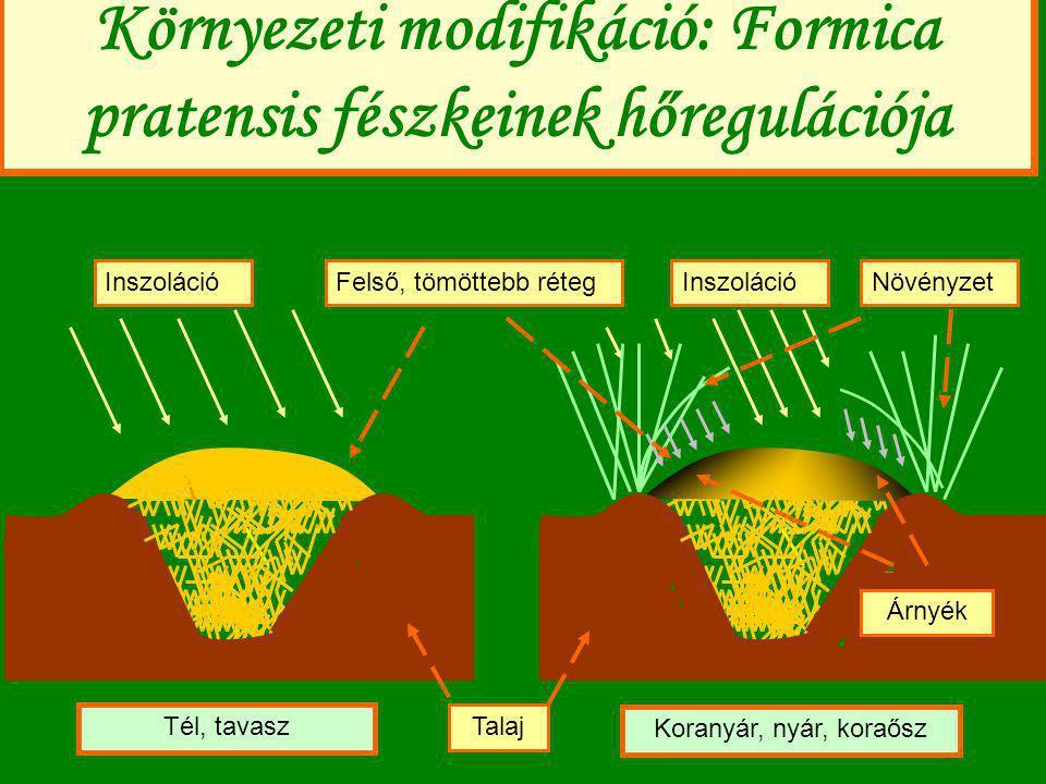 Környezeti modifikáció: Formica pratensis fészkeinek hőregulációja