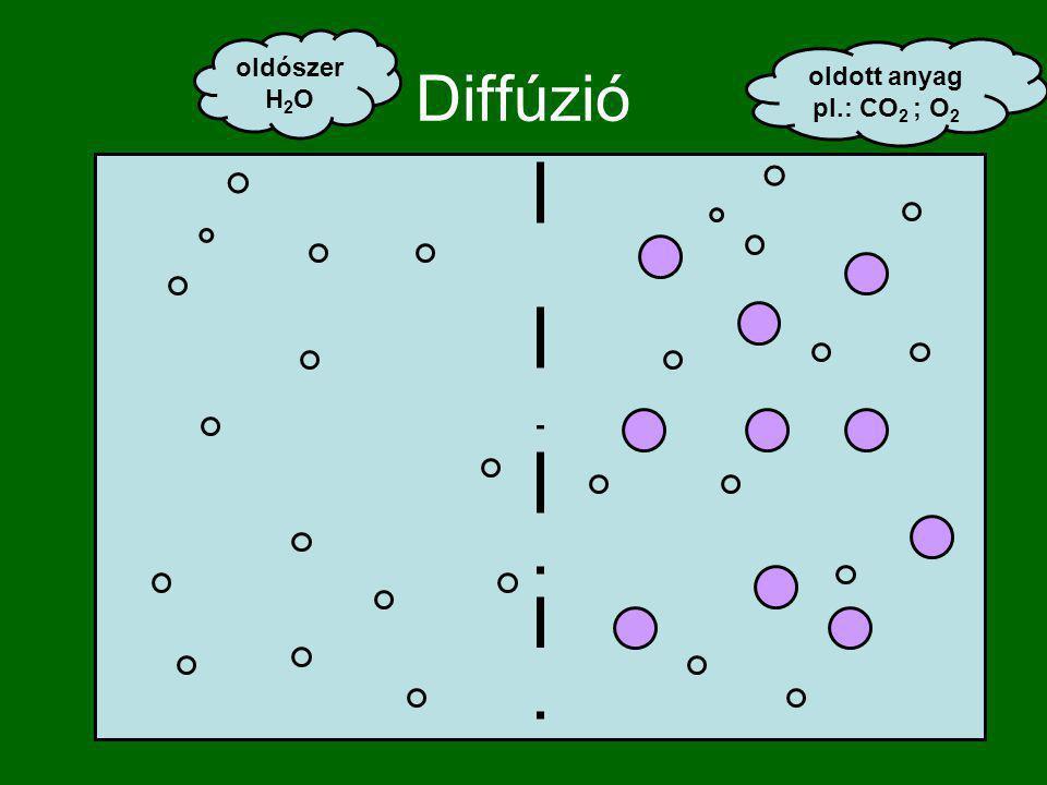 Diffúzió oldószer H2O oldott anyag pl.: CO2 ; O2